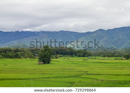Mountain and Field