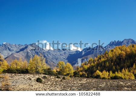 Mountain autumn landscape in the forest