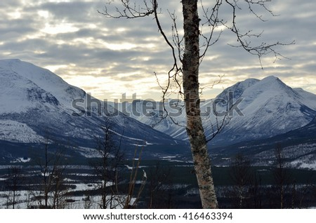 mountain birch tree in front of majestic mountain landscape - stock photo