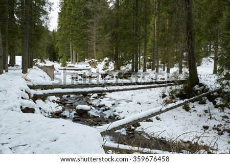 Mountain creek flowing through fir forest on wintertime