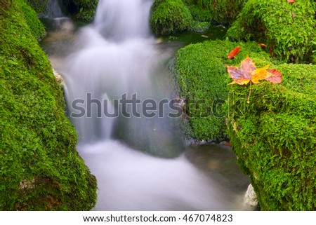 Mountain creek in the autumn forest in Triglav national park in Slovenia