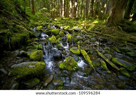 Mountain Creek - Mossy Stones and Stream. Nature Photography Collection. Olympic National Park, WA, U.S.A. - stock photo