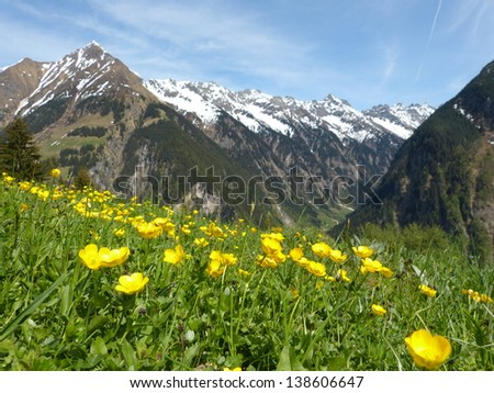 Mountain flower meadow and mountains