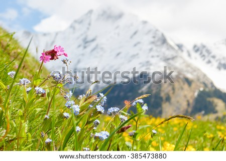 Mountain flower meadow in springtime