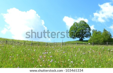 Mountain flower meadow with fence and tree - stock photo
