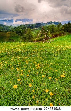 Mountain flower meadow with mountain in background - stock photo