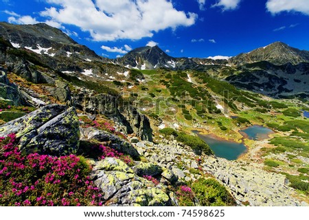 Mountain flowers in National Park Retezat, Romania - stock photo