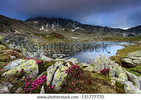 Mountain flowers in National Park Retezat, Romania, Europe - stock photo
