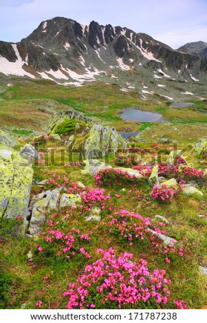 Mountain flowers scattered on green slope