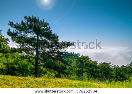 Mountain  fog cloudy - stock photo