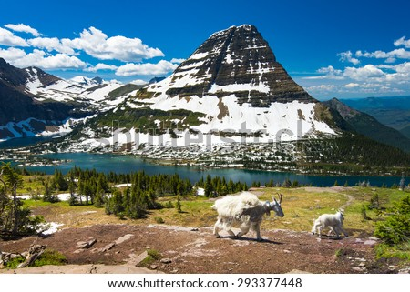 Mountain Goats and hidden lake, Glacier National Park - stock photo