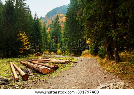 Mountain horizon landscape with tree forest in Zakopane
