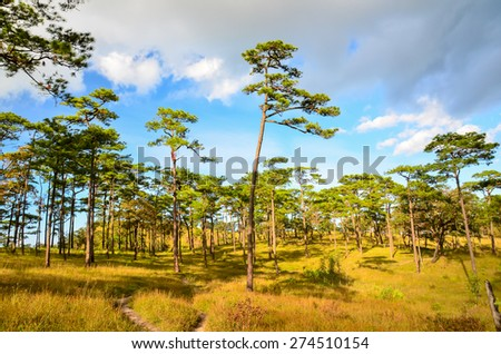 Mountain in Thailand beutiful at Phu Soi Dao national park - stock photo
