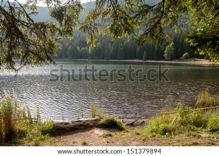 Mountain lake in the pines