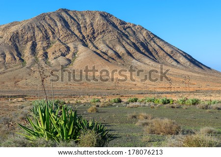 Mountain landscape and green plant near Tindaya town, Fuerteventura, Canary Islands, Spain
