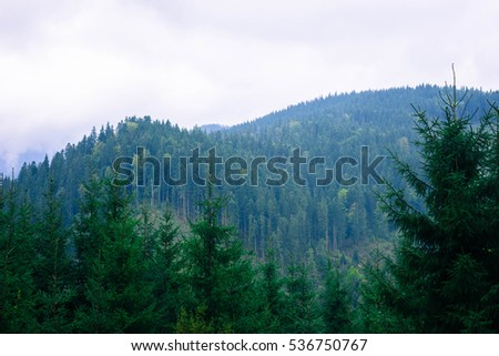 Mountain landscape, fir against mountains