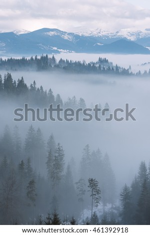 Mountain landscape in winter. Fir forest and fog. Cloudy day. Carpathian Ukraine, Europe. Art processing of photos. Low contrast and color toning