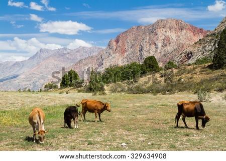 Mountain Landscape of Fan Mountains in summer, Tajikistan, Central Asia - stock photo