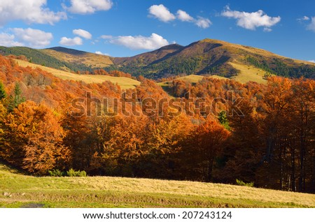 Mountain landscape with autumn forest in the mountains. Sunny Day - stock photo
