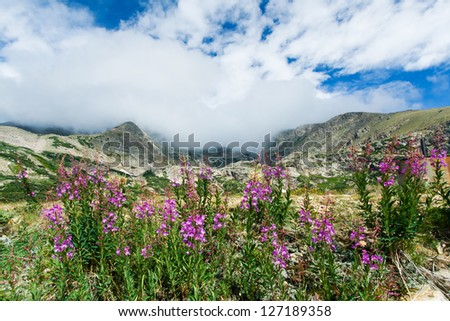 Mountain landscape with blooming summer flowers in Colorado - stock photo