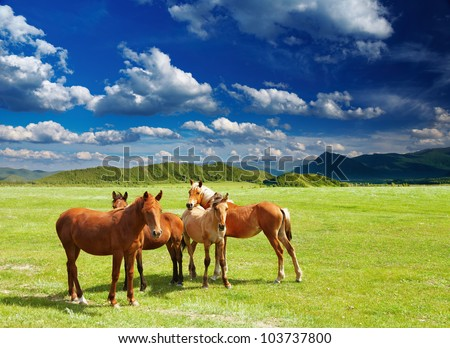 Mountain landscape with grazing horses - stock photo