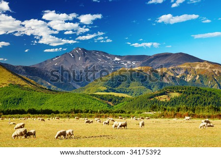 Mountain landscape with grazing sheep, New Zealand - stock photo
