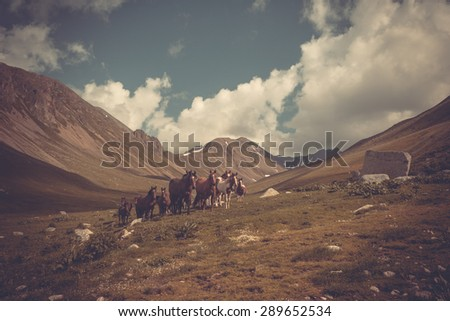 Mountain landscape with horses. A herd of horses on a mountain pasture - stock photo