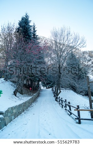 Mountain landscape with snow and snow-covered trees. Mountains in winter with colorful trees