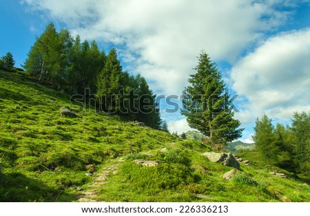 Mountain landscape with trail and green meadow and forest