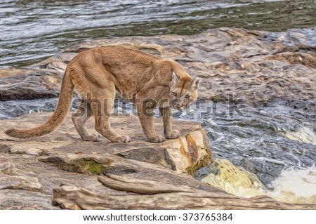 Mountain lion at riverside,digital oil painting - stock photo