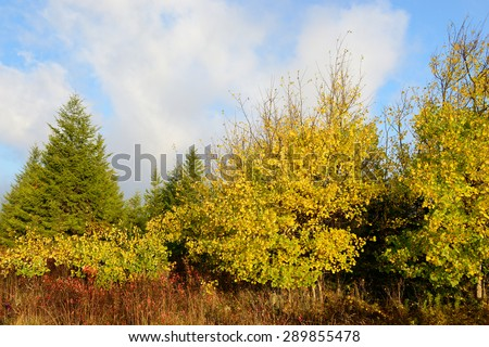 Mountain Meadow in Fall Colors in Early Morning - stock photo