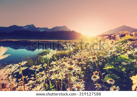 Mountain meadow in sunny day