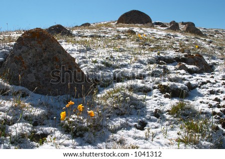 Mountain meadow in the morning after heavy snow 3 - stock photo