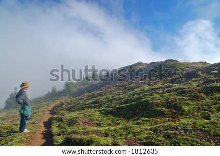 mountain meadow on a hiking trail in Washington State - stock photo