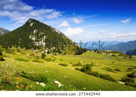 Mountain meadow  with cows in summer day - stock photo