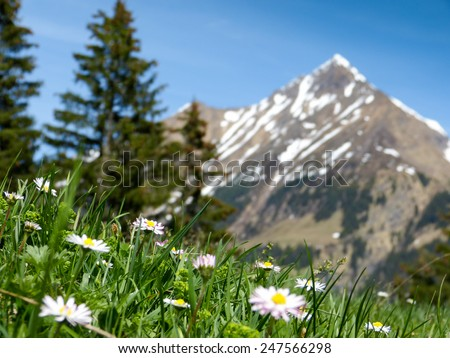 mountain meadow with mountain peak in the background - stock photo