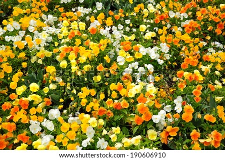mountain meadows flowers switzerland - stock photo