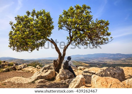 Mountain nature landscape.Green lonely tree on a cliff top and traveler rests. Arbel Cliff National park.View of Galilee Mountains in the distance background. Seasons and travel. Low Galilee. Israel