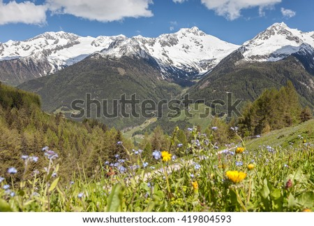 mountain pasture and snow-capped mountains, Italy