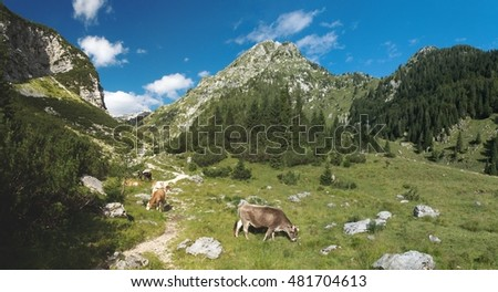 mountain pasture in planina Duplje near Krnsko jezero lake in Julian Alps in Slovenia