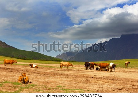 Mountain pasture in the Alps. Cows on a lawn. - stock photo