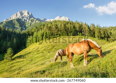 Mountain pasture with horses - stock photo