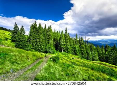 Mountain path in the Carpathian mountains. Panorama - stock photo