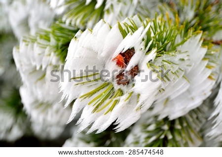 Mountain pine branch with snow. Frosted pine tree twig with cones. - stock photo