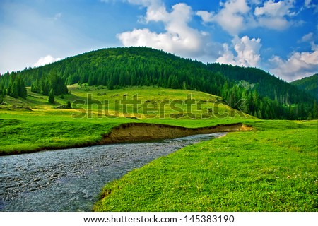 Mountain pine forest and meadow landscape with a creek