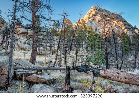 mountain pine forest destroyed by wildfire at Greyrock near Fort Collins, Colorado with sunset light on the Greyrock - stock photo