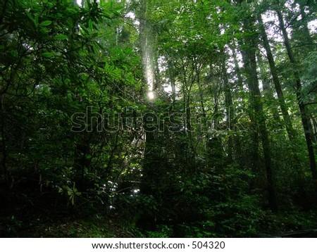 Mountain Rain Forest - stock photo