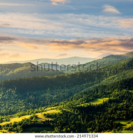 mountain range with coniferous forest on its slopes