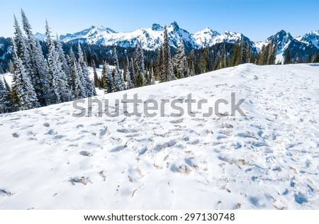 Mountain Range with Snowy Field at Mount Rainier National Park - stock photo