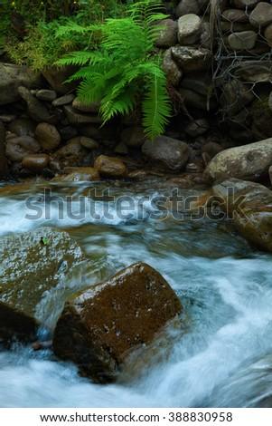 mountain rapid stream - stock photo